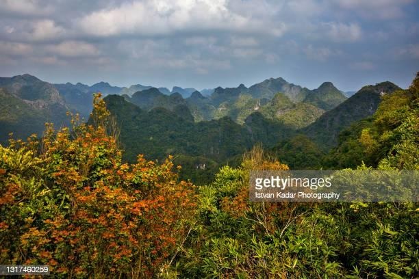 karst mountains on cat ba island, halong bay, vietnam - formación karst fotografías e imágenes de stock