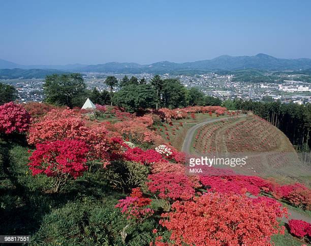 Kasama Tsutsuji Park, Kasama, Ibaraki, Japan