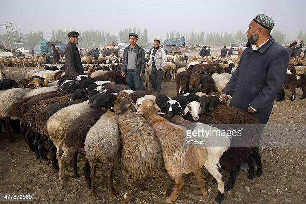 kashgar mercado de gado - kashgar - fotografias e filmes do acervo