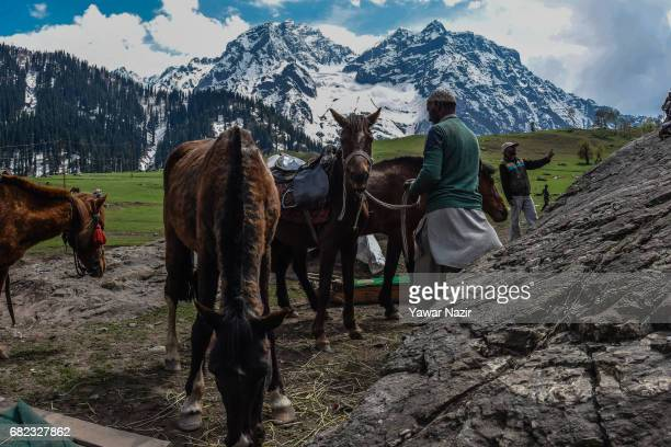 Kashimri men wait for tourists with their ponies near Thajiwas glacier on way to the Zojila pass after the SrinagarLeh highway was thrown open by the...