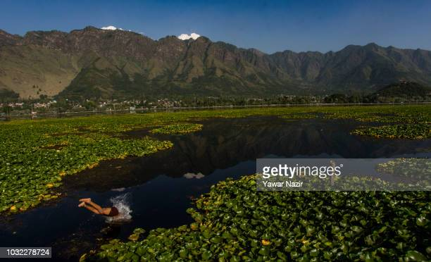 Kashmiri boy jumps into Dal lake on September 12 2018 in Srinagar the summer capital of Indian administered Kashmir India Kashmir the Muslim majority...