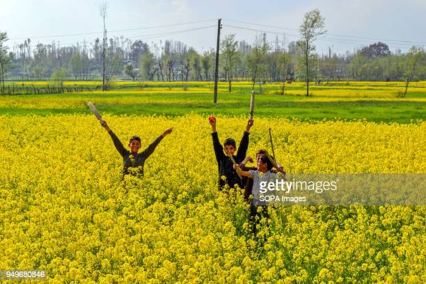 Kashmiri children play in a field of mustard flowers in Awantipora 35kms south of Srinagar Indian administered Kashmir According to the Directorate...