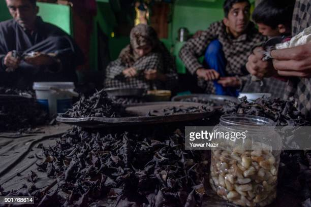 Kashmiri family including children laced with protective rubber all over their fingers moving a special knife tactfully over the chestnuts extract...