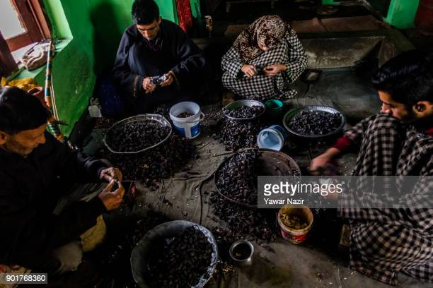 Kashmiri family including children wearing protective rubber all over their fingers move a special knife tactfully over the chestnuts extract water...