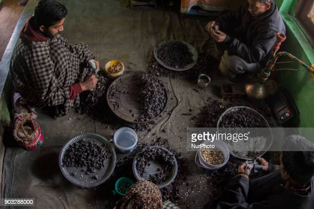 A Kashmiri family laced with protective rubber all over their fingers moving a special knife tactfully over the chestnuts to remove the shells they...