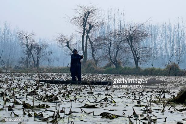 A Kashmiri farmer rides a boat before dipping in cold waters to extract lotus stems locally known as Nadur at Anchar Lake in Srinagar on January 2...