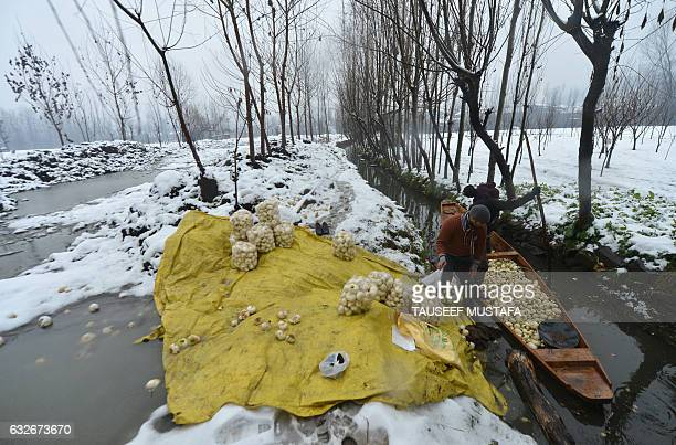 Kashmiri farmers cleans turnips on a boat on the Dal Lake during aheavy snowfall in Srinagar on January 25 2017 Avalanches killed five people in...
