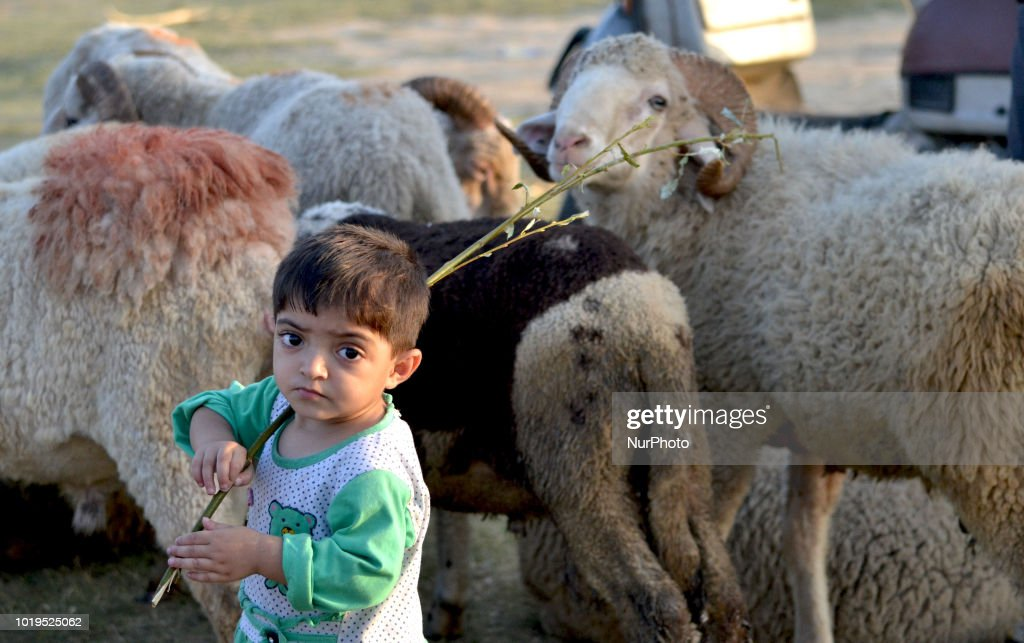 Eid-al Adha Preparation In Kashmir
