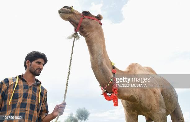 A Kashmiri livestock vendor sells a camel ahead of the Muslim festival of Eid alAdha in Srinagar on August 17 2018 Muslims across the world are...