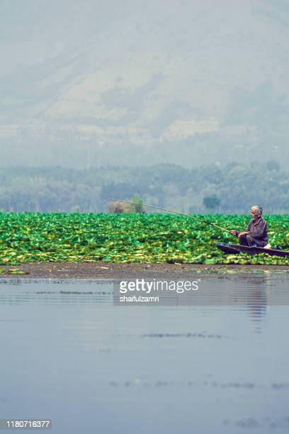 a kashmiri man paddling a shikara (traditional boat) on dal lake of kashmir, india while fishing. - shaifulzamri fotografías e imágenes de stock