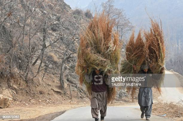 TOPSHOT Kashmiri men carry grass for cattle on the outskirts of Srinagar on January 17 2018 / AFP PHOTO / TAUSEEF MUSTAFA
