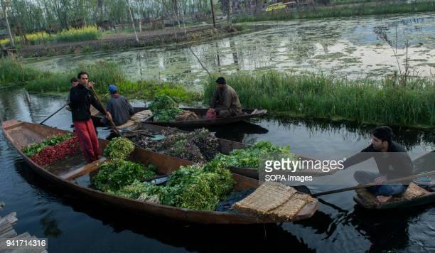 KASHMIR SRINAGAR JAMMU KASHMIR ICELAND Kashmiri men gather with their boats laden with vegetables at the floating vegetable market on Dal Lake at...