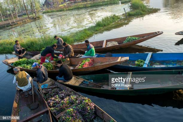 KASHMIR SRINAGAR JAMMU KASHMIR INDIA Kashmiri men gather with their boats laden with vegetables at the floating vegetable market on Dal Lake at dawn...