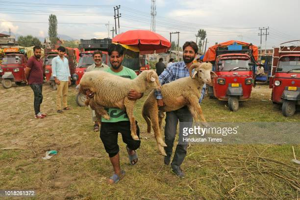 Kashmiri men leave after buying sheep at a livestock market Eidgah area ahead of the Muslim Festival of Eid alAdha on August 17 2018 in Srinagar India