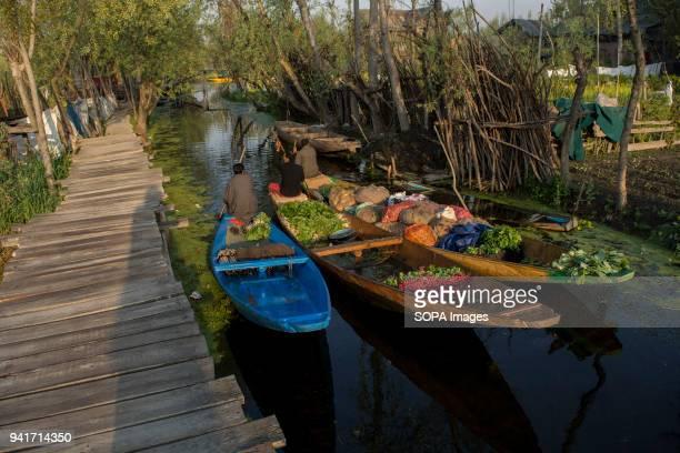 KASHMIR SRINAGAR JAMMU KASHMIR INDIA Kashmiri men rows their vegetable laden boats early in the morning at the floating vegetable market on Dal Lake...