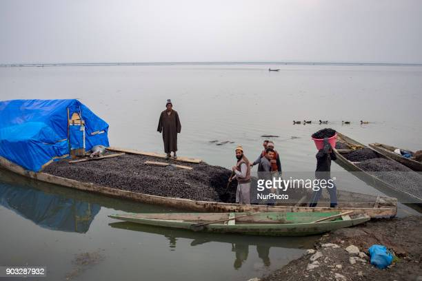 Kashmiri men unload their vessel full of water chestnuts after extracting them from the lake each year from November through February thousands of...