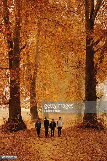 Kashmiri Muslim boys walking in the nishat garden during Autumn season in Srinagar Indian controlled Kashmir Tree leaves are changing colors while...
