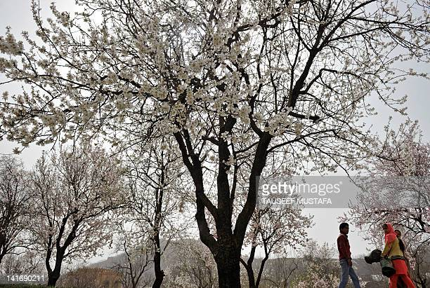 A Kashmiri Muslim family walks in an orchard of blossoming almond trees which mark the arrival of spring in Srinagar March 21 2012 AFP PHOTO/Tauseef...