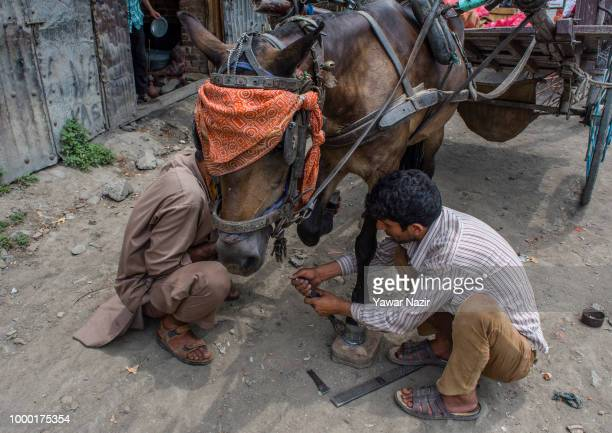 Kashmiri Muslim farriers fit a horseshoe to a horse in a market on July 16 2018 in Budgam west of Srinagar the summer capital of Indian administered...