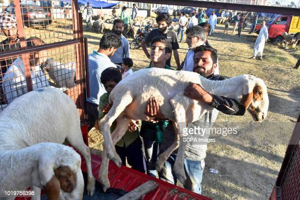 Kashmiri Muslim seen carrying a sheep after buying it from a market ahead of the Muslim festival Eid alAdha Muslims across the world are preparing to...