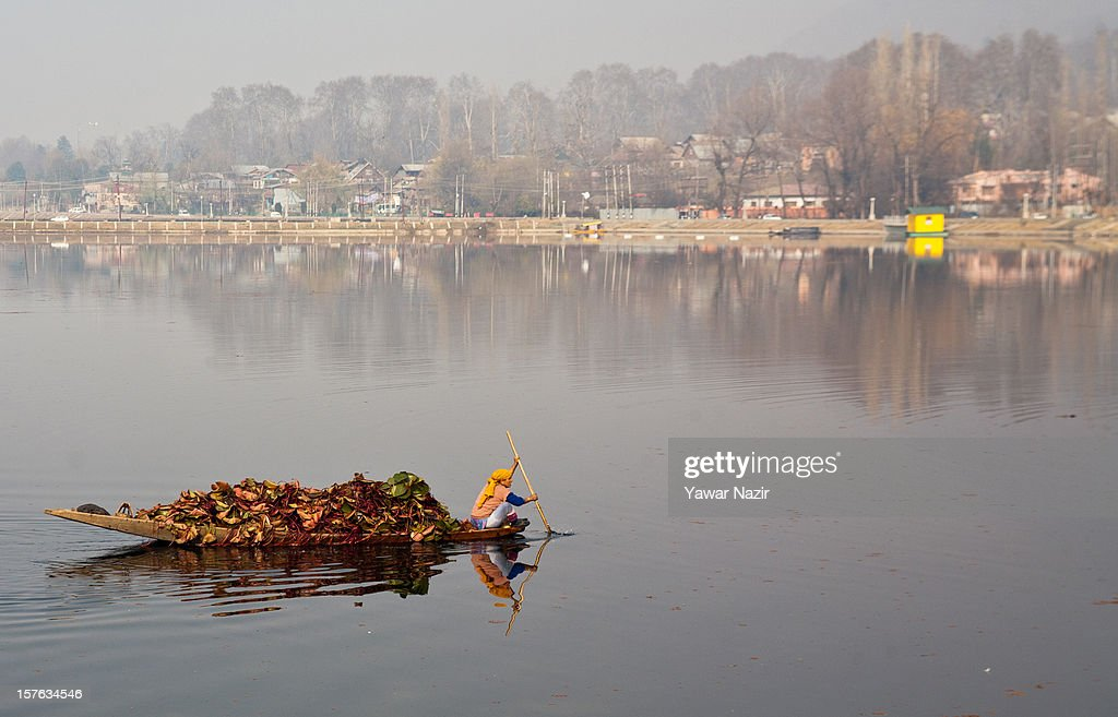 A Kashmiri Muslim woman carry lotus leaves in her boat while rowing towards her home on December 05, 2012 in Srinagar, the summer capital of Indian administered Kashmir, India. The Dal Lake in Kashmir is integral to tourism and recreation for tourists who have started to come in huge number since last year. Dal Lake has a total area of 29 square kilometres and is home to thousands of Shikaras and houseboats.