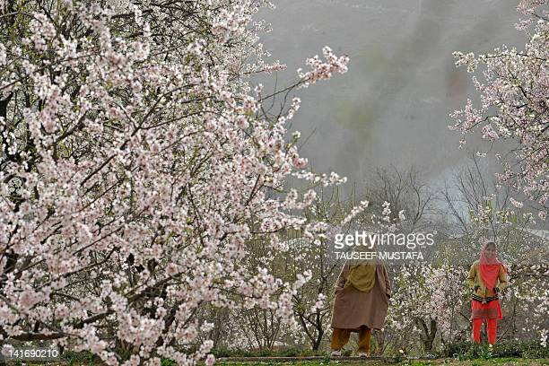 Kashmiri Muslim women stand in an orchard of blossoming almond trees which mark the arrival of spring in Srinagar March 21 2012 AFP PHOTO/Tauseef...