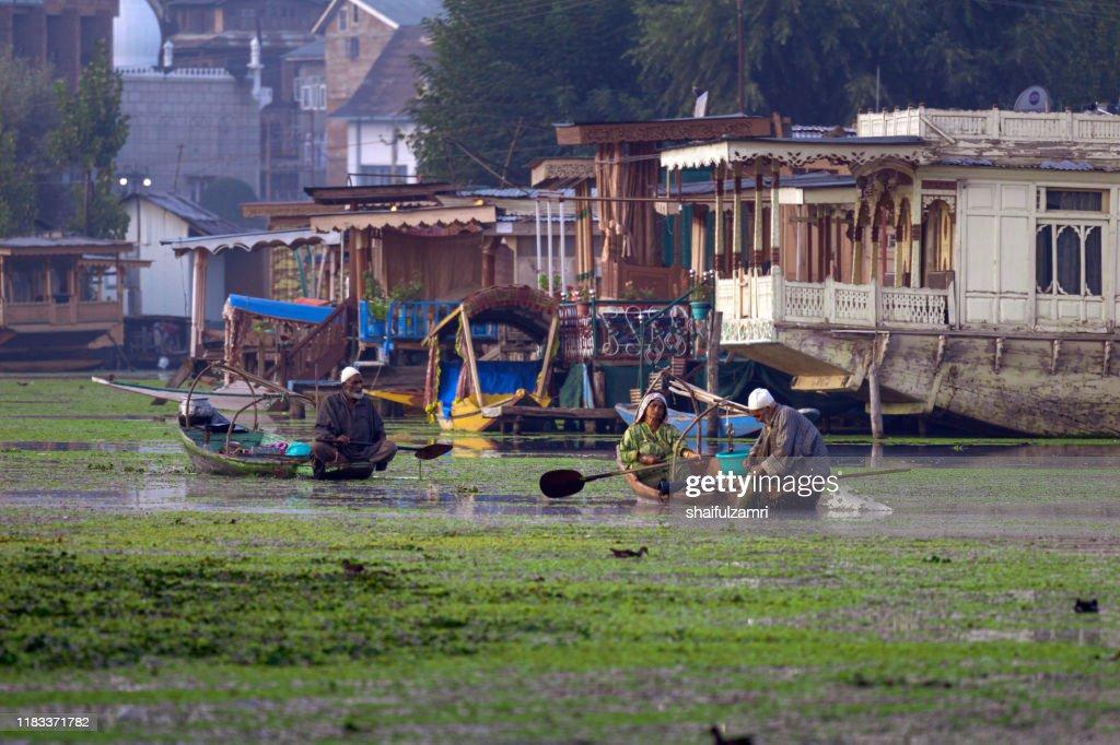 A Kashmiri people paddling a shikara (traditional boat) on Dal Lake of Kashmir, India. : Stock Photo