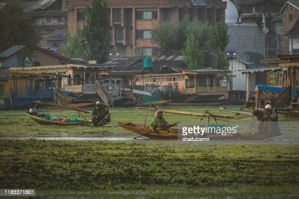 a kashmiri people paddling a shikara (traditional boat) on dal lake of kashmir, india. - shaifulzamri - fotografias e filmes do acervo