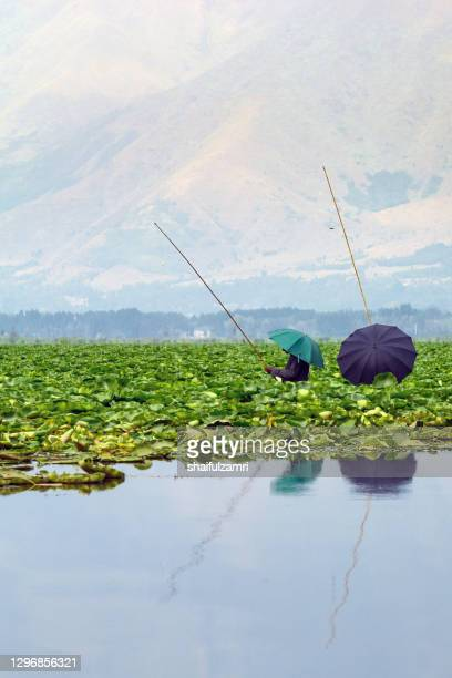 a kashmiri people try to catch a fish at dal lake of kashmir, india. - shaifulzamri stock pictures, royalty-free photos & images