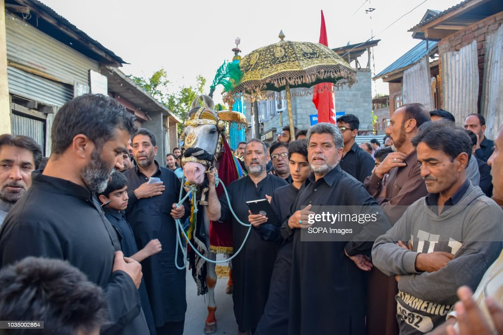 Non Muslim Perspective On The Revolution Of Imam Hussain: Kashmiri Shia Muslims Touch A Horse, Symbolising Horse Of