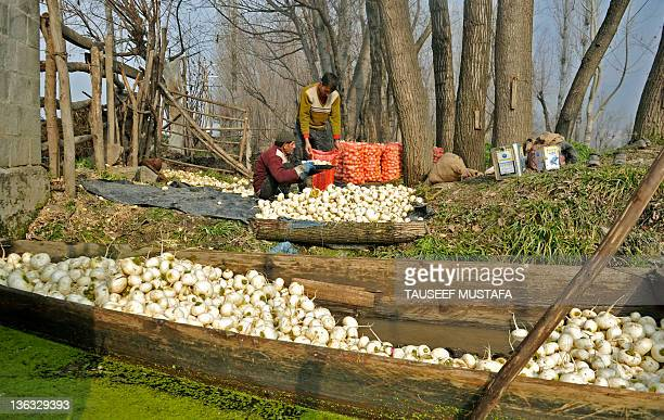 Kashmiri turnip farmers load their harvest into sacks, as they prepare to travel to a floating vegetable market on Dal Lake in Srinagar on January 2,...