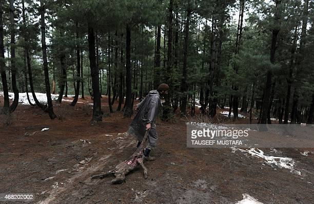 A Kashmiri villager drags a dead cow through woods in the village of Laden at Chadoora some 40kms west of Srinagar on March 31 2015 Emergency workers...