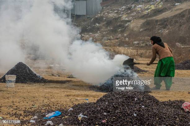Kashmiri woman burns the water chestnut shells to obtain charcoal which will be later used as fuel in kangris an earthenware container with an outer...