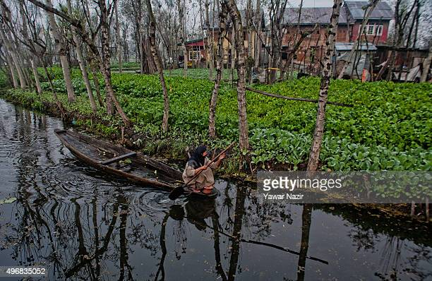 Kashmiri woman paddles her boat to the floating vegetable market on Dal Lake at dawn on November 12 2015 in Srinagar the summer capital of Indian...