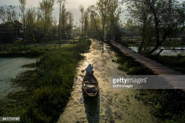 Kashmiri woman rows her boat early in the morning in world famous Dal lake in the summer capital of Indian administered Kashmir India Elusive boatmen...