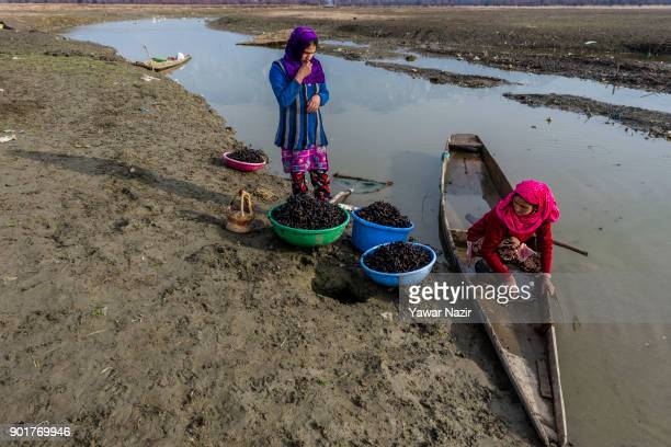 Kashmiri women clean water chestnuts in a rivulet after harvesting them from mud and weed of the marsh on January 05 2018 in Kolhom north of Srinagar...