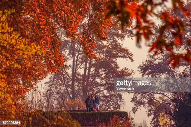 Kashmiris walk in the Nishat Mughal garden during the autumn season on November 9 2017 in Srinagar the summer capital of Indian administered Kashmir...