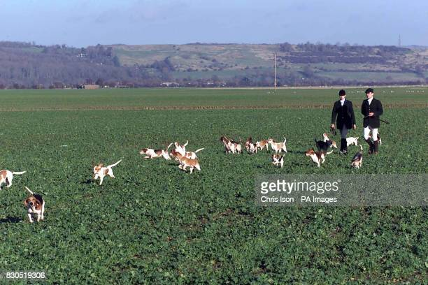 Kate Bull Joint Master of the Wye Beagles Hunt heads for the Romney Marsh near Dymchurch Kent with borrowed hounds from neighbouring hunts who lent...
