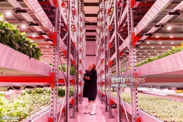 2016 Kate Hofman of GrowUp Urban Farm producing fresh fish salads and herbs using a combination of aquaponic and vertical growing technologies poses...