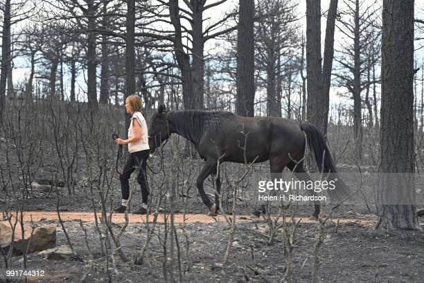 Kate McCabe leads Tobie one of her three rescued horses out of the burn area of the Spring Creek Fire in Piney Ridge Ranch on July 4 2018 in La Veta...
