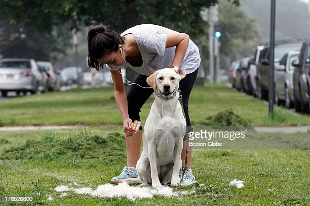Kate Papillo grooms her dog Sadie along Columbia Road in Dorchester Massachusetts on June 27 2013