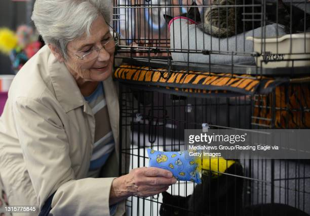 Kathay [cq] Young of Sinking Spring plays with a cat and a toy.Reading Standard Motorsports in Exeter Township hosts One By One Cat Rescue and Noah's...