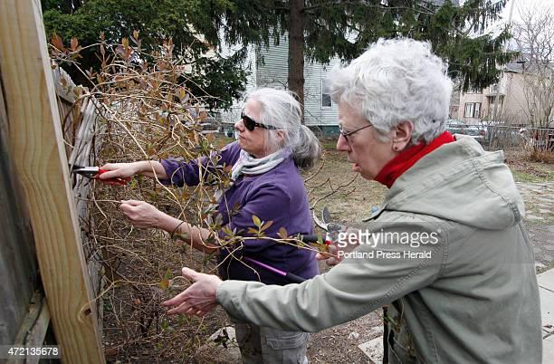 Kathleen Carr Bailey a gardening coach helps Ann Deutsch prune a honeysuckle vine in her garden in Portland Tuesday April 28 2015