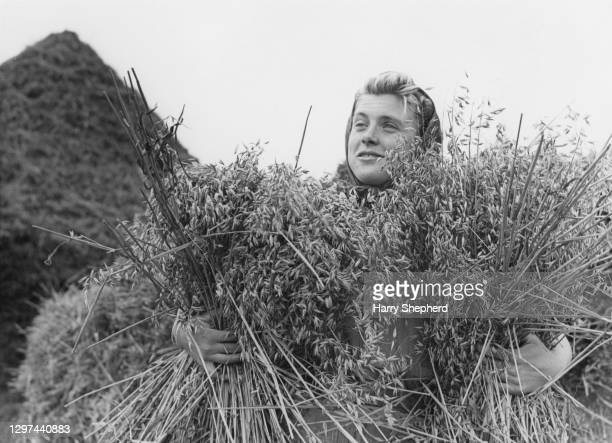Kathleen Clark a member of the Women's Land Army at work gathering bushels of oats on 9th September 1944 at a farm in Sussex, United Kingdom. The...