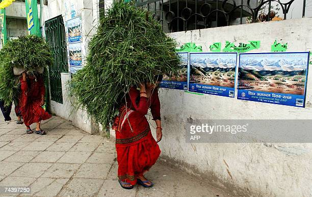 Nepalese women carrying grass for their cattle walk past posters depicting World Environment Day in Kathmandu 05 June 2007 Himalayan glaciers are...