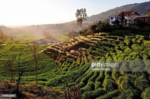 kathmandu valley countryside, nepal - nepal imagens e fotografias de stock