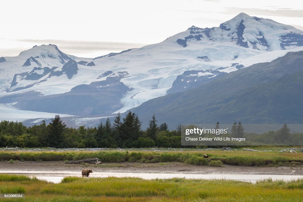 Katmai National Park : Stock Photo