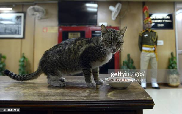 Katrina a stray cat who made her home in police commissioner's office A cat named Katrina has been living in Delhi Police Commissioner's office in...