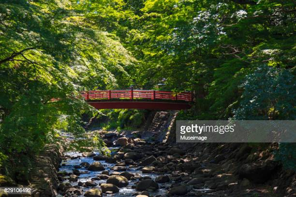 katsura bridge of bamboo forest path, izu city - shizuoka stock pictures, royalty-free photos & images