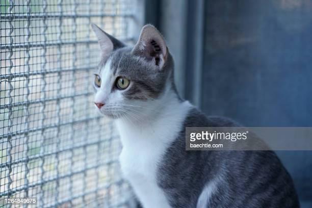 katze in einem tierheim - sfruttamento degli animali foto e immagini stock